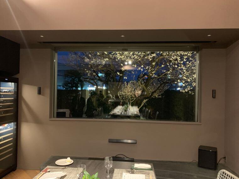窓から見える桜の木